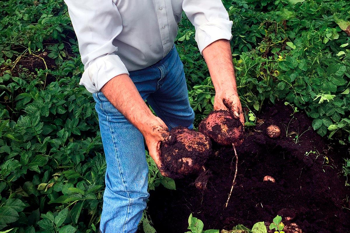 Plan nutricional cultivo de papa, finca Ananda vereda la Pradera Subachoque Cundinamarca